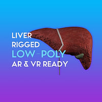 3D Liver & Gallbladder LOW POLY