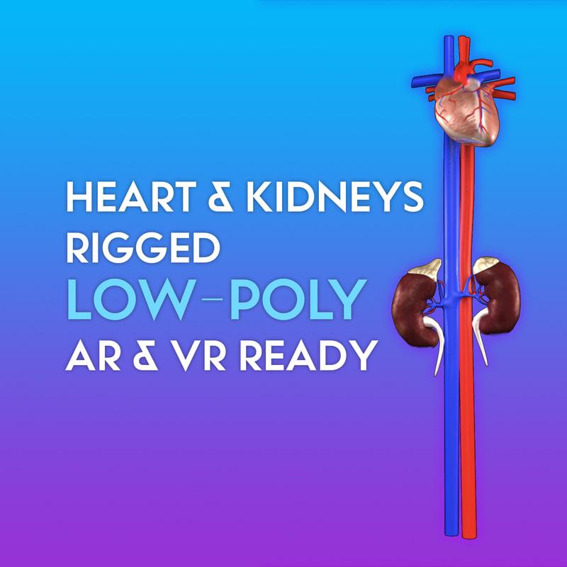 low-poly heart kidney ready 3D model
