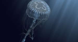 bioluminescent jellyfish model