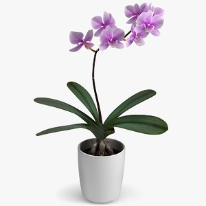 3D realistic orchid flower