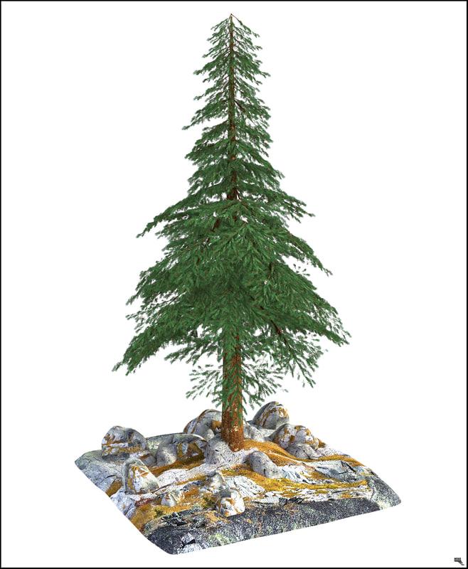 pine tree 3D