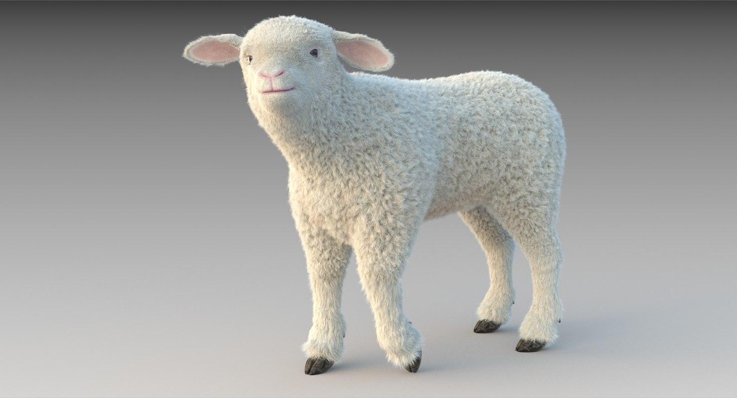lamb fur rigged 3D model
