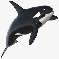 Killer Whale RIGGED ANIMATED
