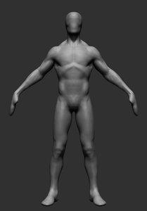 anatomy ztl zbrush 3D model