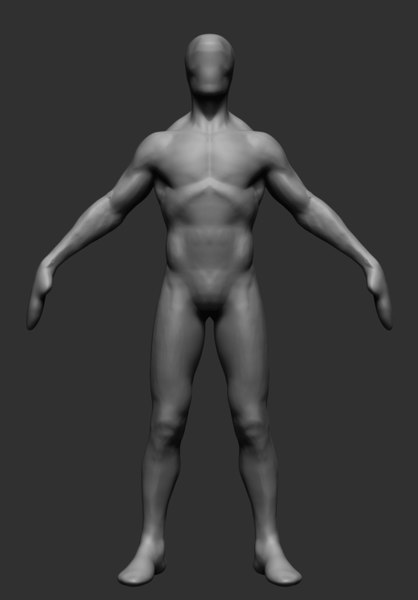 anatomy ztl zbrush 3D model