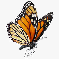 3D milkweed butterfly flying pose