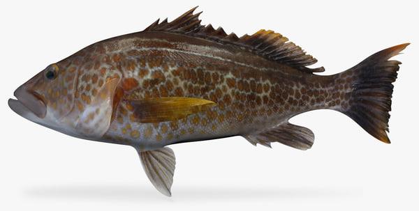 3D model goldspotted sand bass