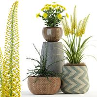 plants 81 3D