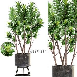 3D dracaena tree