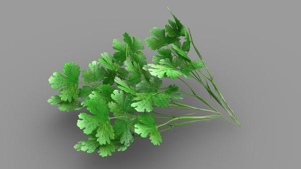 coriander leaves 3D model