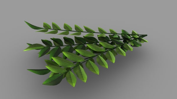 3D curry leaves model