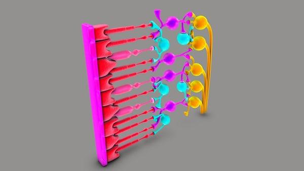 3D model retina vision