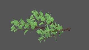 3D mentha species model
