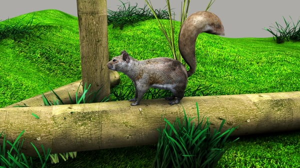 squirrels family sciuridae 3D model