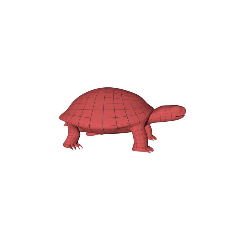 3D base mesh tortoise model