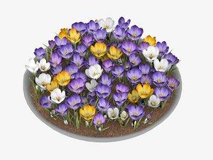 crocus flowers 3D model