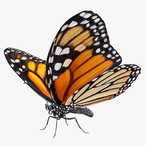 3D model danaus plexippus butterfly