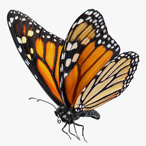 3D monarch butterfly flying pose