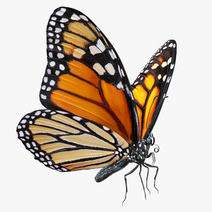 3D model monarch butterfly rigged