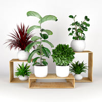 Plants collection