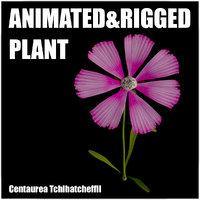 3D flowers animation model