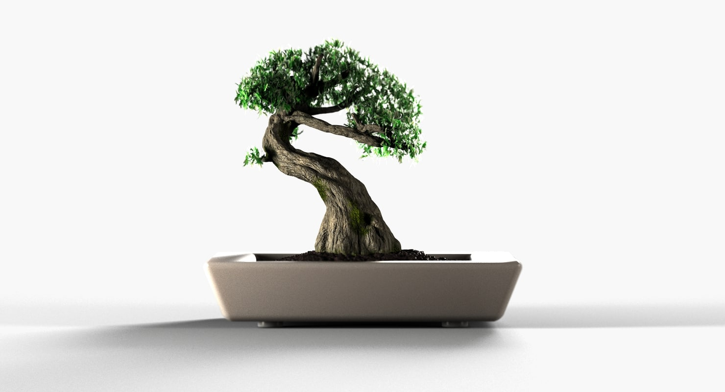 3D bonsai tree model