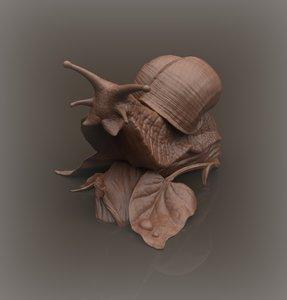 snail model