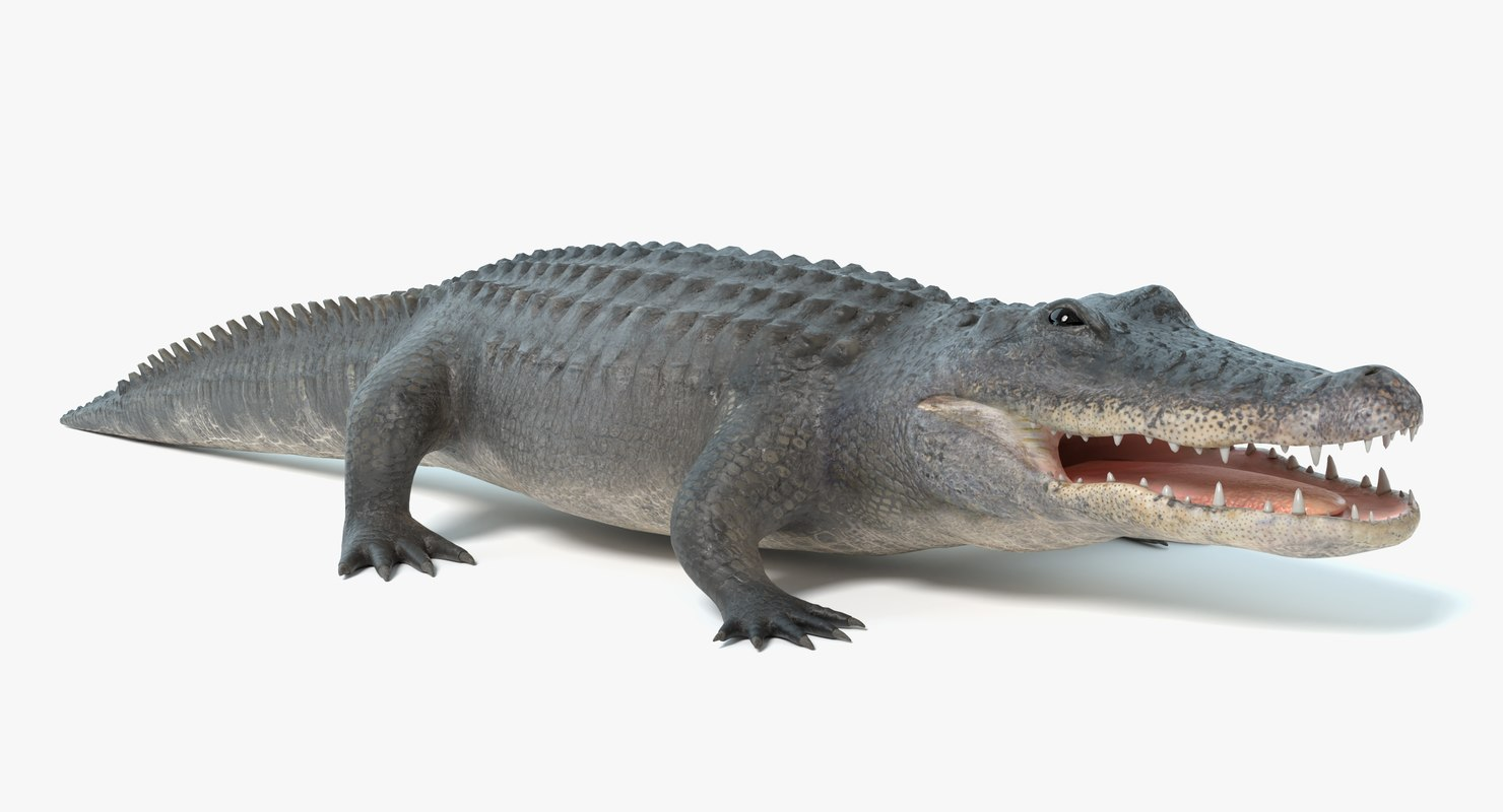 alligator pbr polys 3D model