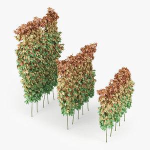 3D fence liana
