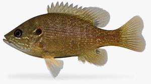 lepomis cyanellus green sunfish 3D model