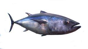 3D tuna model