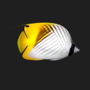 butterfly fish e 3D
