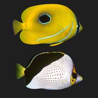 butterfly fish 2 3D model