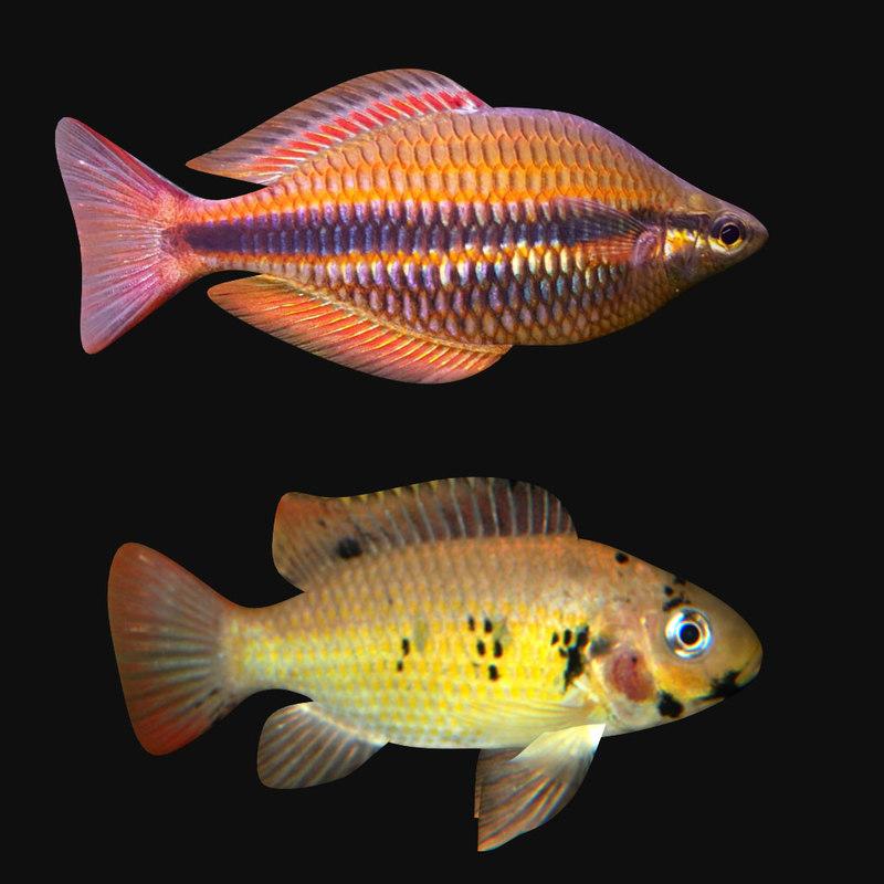 fronto fish 2 3D model