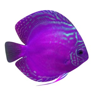 3D alenquer purple