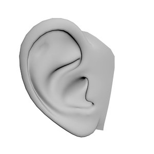 human ear 3D model