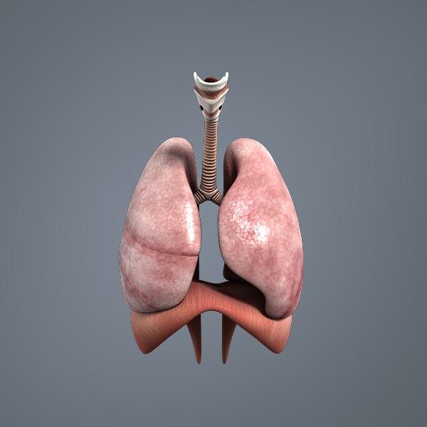 respiratory medical 3D