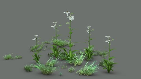 3D model lilium candidum