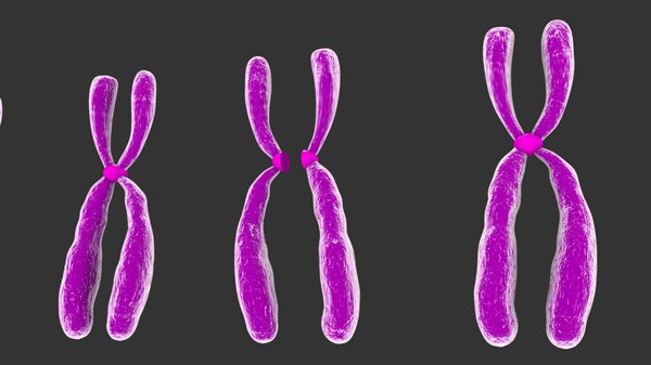 humans chromosomes model