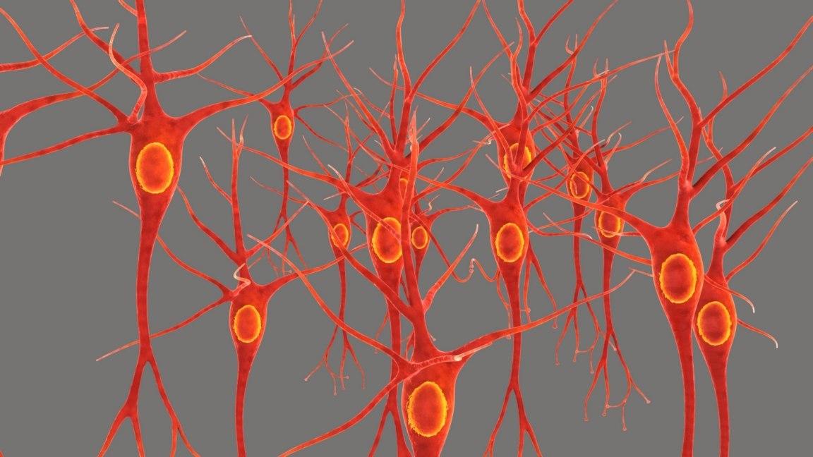 3D neural tissue model
