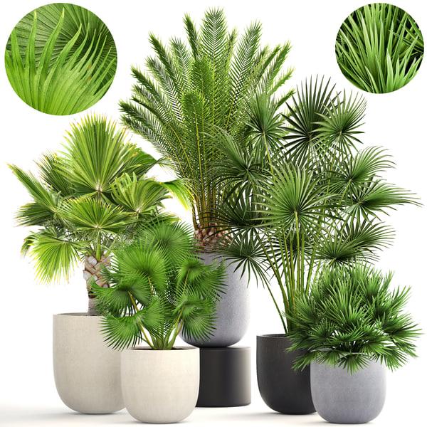 3D pots palm