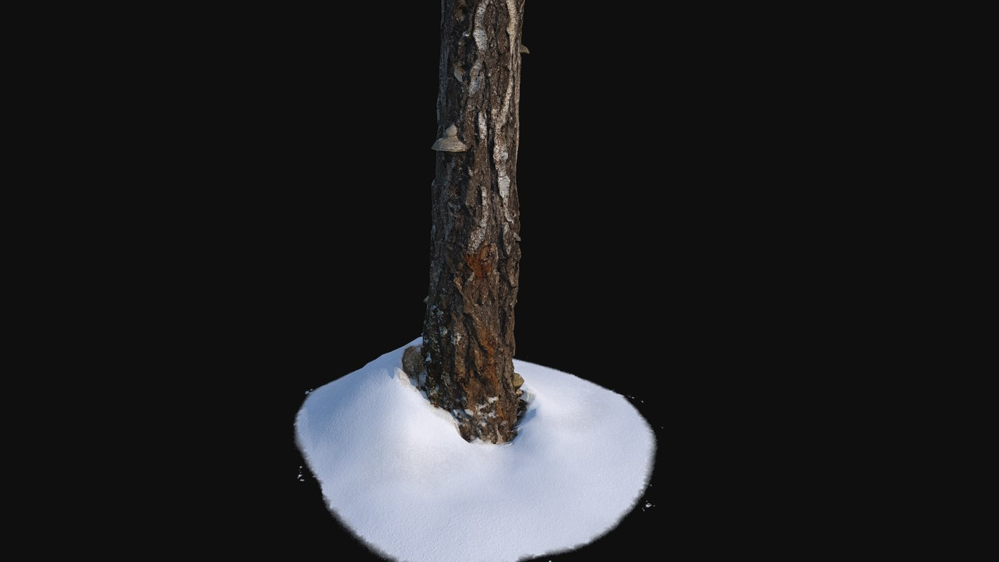 stump scanned 3D model