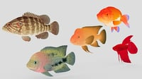 fish 01 model
