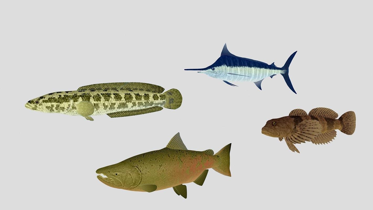 3D fish 03