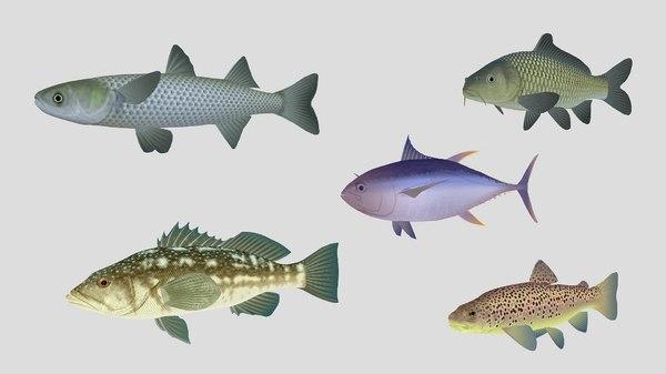 fish 05 3D model