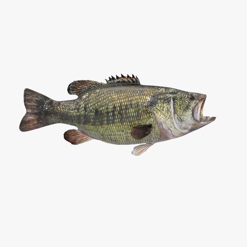 largemouth bass 3D model