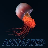 3D jellyfish animations model