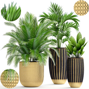 plants areca palm 3D model