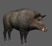 3D model wild boar