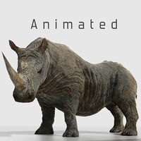 3D model southern white african rhino